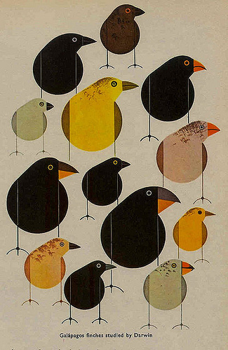 """Galapagos finches studied by Darwin,"" Charley Harper  From a 1960s Biology textbook. Contributed by V. Boehm by  SU Professional and Technical Writing is licensed under CC BY 2.0"